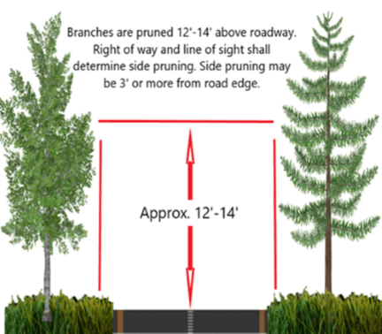 Tree Pruning Guidelines with dimensions